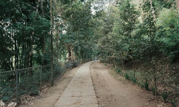 Jalan di Taman Hutan