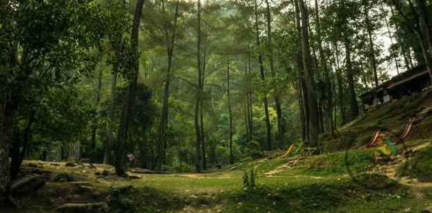 bukanrastaman hutan juanda 11111 (1 of 1)
