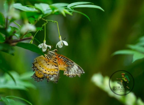 buterfly garden 211ss-07539